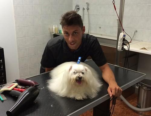 Oscar   by wellnessdog