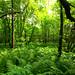 Forest of Ferns & Nettles