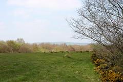 02-Bryn-Lliw-Grasslands