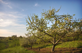 Apple Orchard | by See1,Do1,Teach1