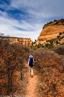 Brushy Trail | by IntrepidXJ