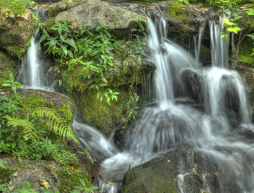 water waterfall moss florida lichen cascade rainbowsprings lovefl