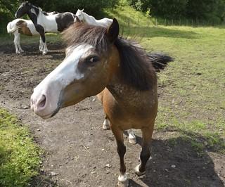 Haud Yer Horses | by KFCSpike