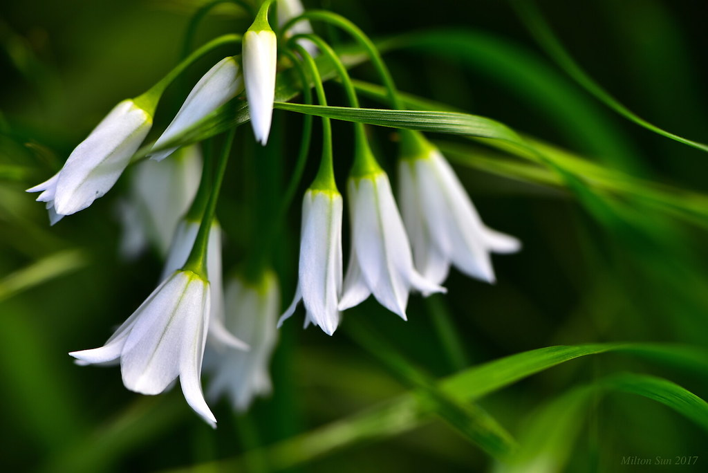 Spring - Wildflowers