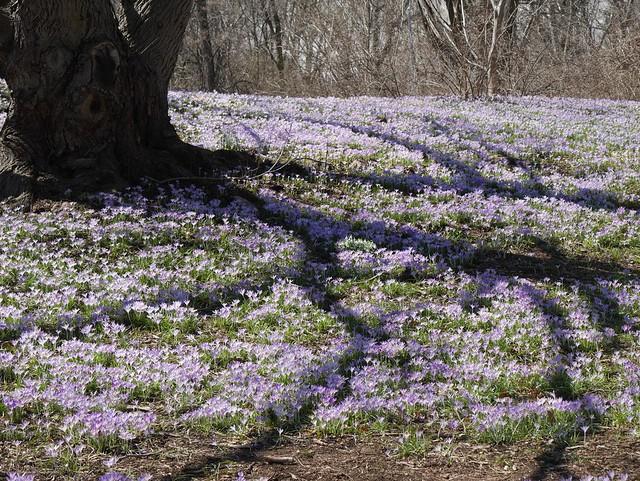 火, 2014-04-01 14:00 - Brooklyn Botanic Garden