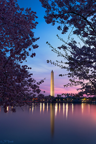 pink blue light reflection water sunrise washingtondc purple cherryblossoms washingtonmonument yoshino tidalbasin 1740l cs6 lr5 5dii jpbenante