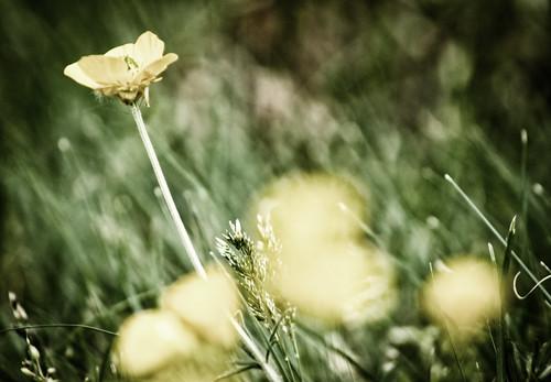 flowers field virginia unitedstates breeze
