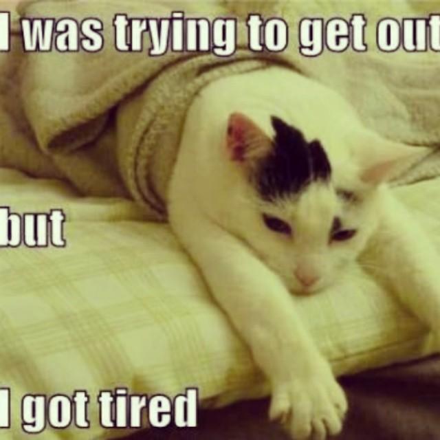 Me In The Morning Lol Lolcat Cat Joke 9gag Funny Flickr
