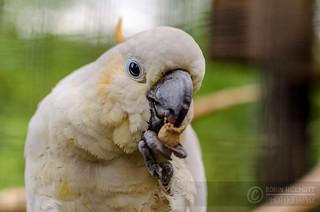 Parrots | by Robin Hickmott