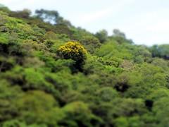Ilha de Itacuruçá