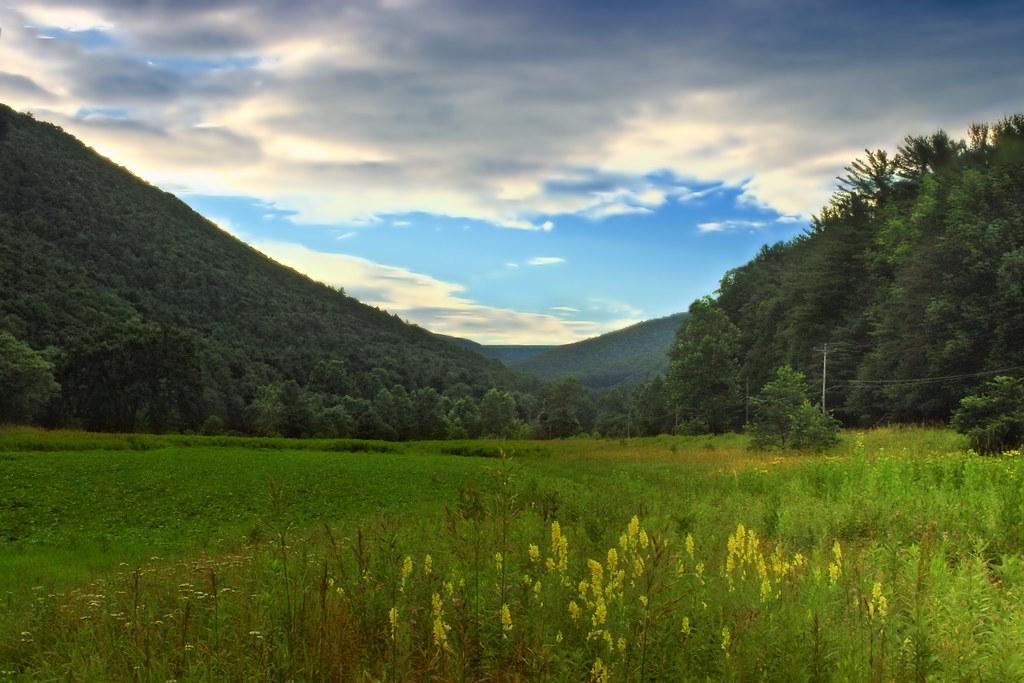 Pine Creek Valley | Wildflower meadow along Pine Creek at ...