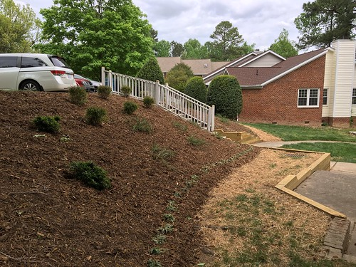 New plantings and grass coming up. | by Triangle Landscape Group
