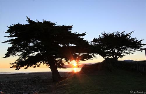 trees sunset sea newzealand sky sun beach silhouette northisland aotearoa channel kapiti raumati macrocapa rangituhi