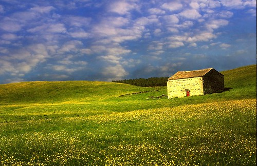 light sunlight flower nature rural landscape countryside yorkshire barns he 1001nights dales buttercups