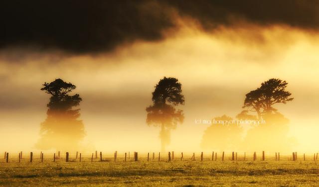 layered mist