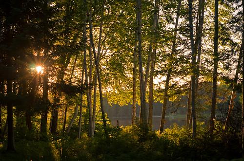 trees sunset sun lake leaves pine forest landscape evening back leaf spring woods glow michigan bark birch lit