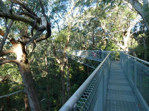 Illawarra Fly Treetop Walk | by Dushan and Miae