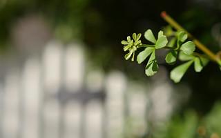 Jaywaii Flowers July 2014-21   by Jean-Yves TRAN