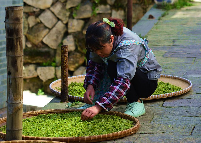 Hangzhou - Longjing Tea Drying