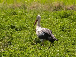 Stork | by ErdenizS