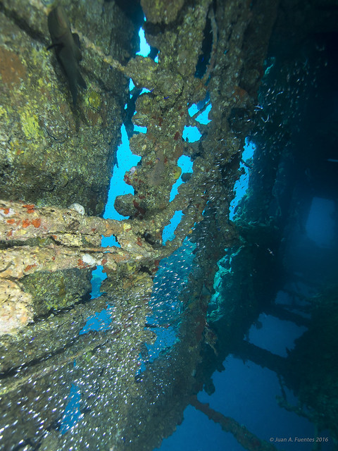 SS Umbría - Arrecife Wingate - Port Sudan
