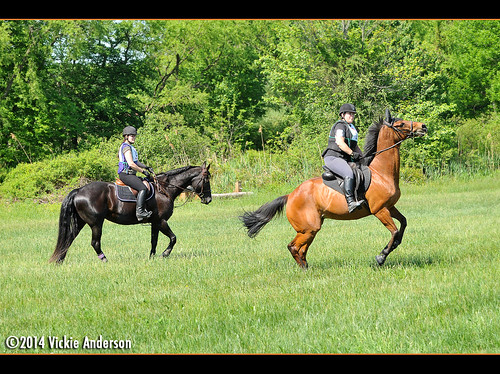 I was hoping for a quiet schooling session. Wizard had other ideas. | by Rock and Racehorses