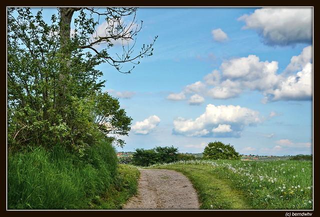 Feldweg zur Ostsee bei Holnis / Schleswig-Holstein