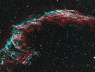 Eastern Veil bi-color | by Andysea1
