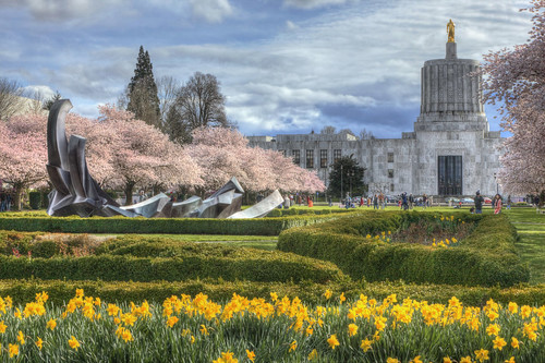 ian sane images springhassprung oregon state capitol building mall salem travelsalem cherry blossom trees pink daffodils flowers yellow landscape photography canon eos 5d mark ii two camera ef70200mm f28l is usm lens sculpture tommorandi weltzinblix spraguememorialfountain
