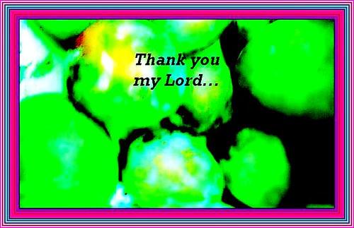 Gratitude | by Iqbal Osman1