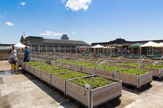 Doors Open Toronto: Eastdale Collegiate Rooftop Garden | by karenstintz