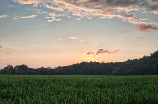 Cornfield after sunset | by Vincent1825