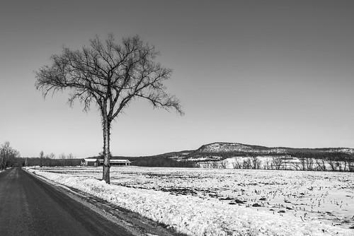 vermont winter tree addison addisoncounty vergennes