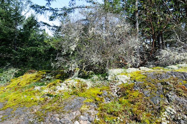 Mossy bush and rocks