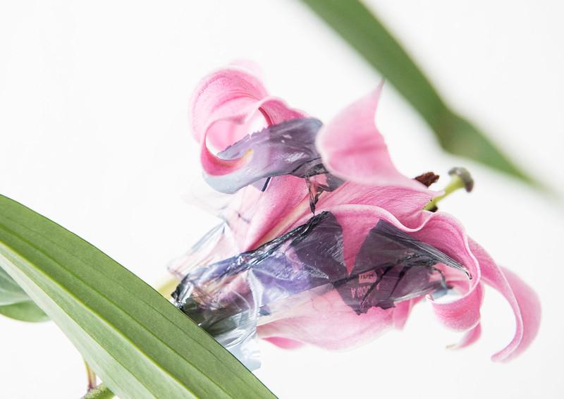 Katalog květy tisk3