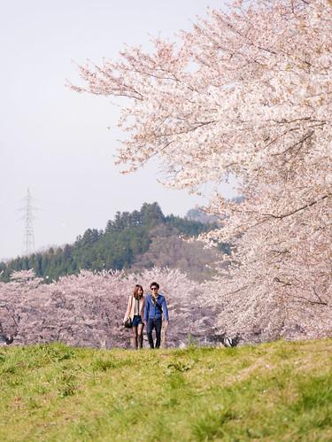 japan panasonic 桜 日本 sakura miyagi ogawa 宮城 shibata 柴田 大河原 gx7 14140ii