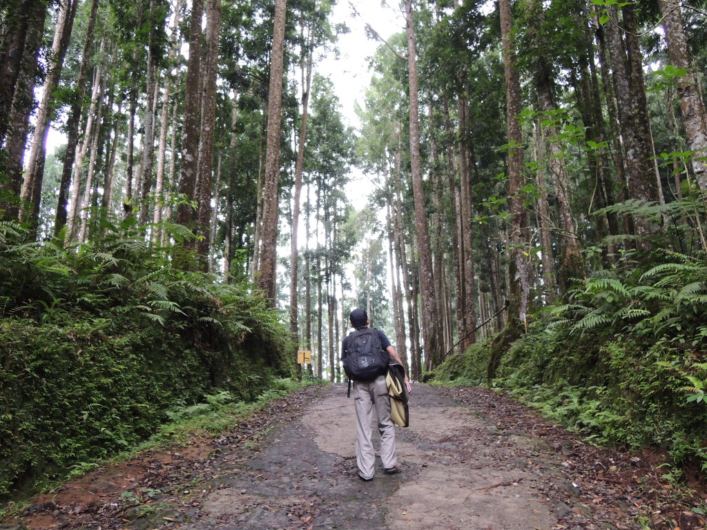 Image result for walking through forest
