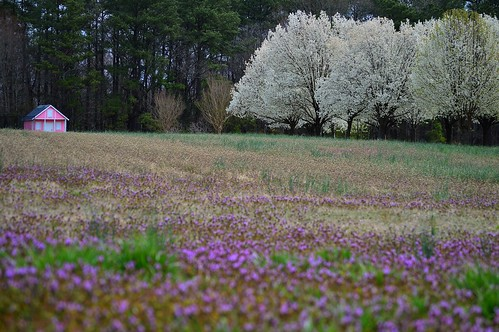 spring blossoms blooming sanfordnorthcarolina