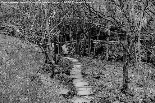Path To Donkey Bridge, Norland.