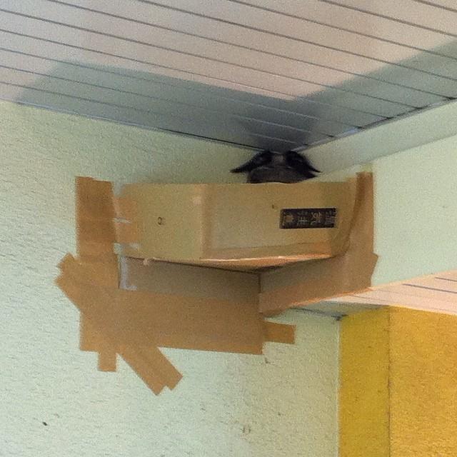 ツバメ の 巣 補強