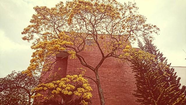 La ciudad bonita. #FotografíaCallejera #LaAurora #Amarillo #Bucaramanga