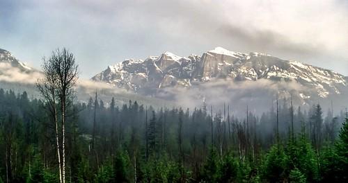silverton bc mountain mist forest