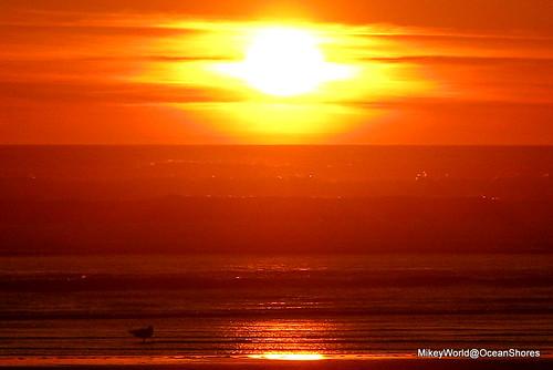 sunset orange sun bird seagull 13th oceanshores shorebird mikeyworld