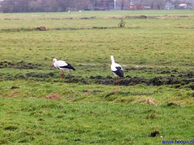 21-12-2013 Den Hoorn 25 km  (60)