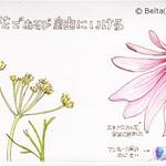 2014_07_05_flower_02_s