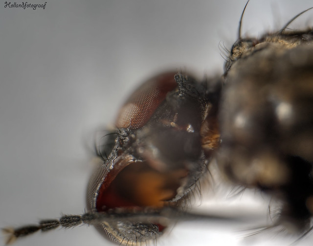 the lock behind a fly eye