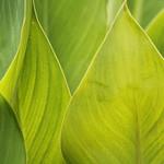 Leaves  IMG_1654flxp