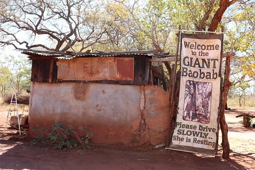 southafrica südafrika suidafrika limpopo baobab