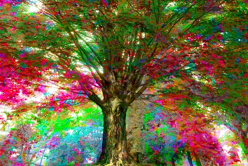 tree recolored fall colors autumn vermont new england massachusetts maine hampshire maple photoshop flickr google bing daum yahoo image stumbleupon facebook getty national geographic magazine creative creativity montage composite manipulation color hue saturation flickrhivemind pinterest reddit flickriver t pixelpeeper blog blogs openuniversity flic twitter alpilo commons wiki wikimedia worldskills oceannetworks ilri comflight newsroom fiveprime photoscape winners all people young photographers paysage artistic photo pin android colourful red blue green white air eye art landscape