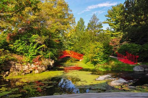 autumn fall leaves photo nikon seasons photos michigan unlimited d90 dowgardens fallmorning unlimitedphotos